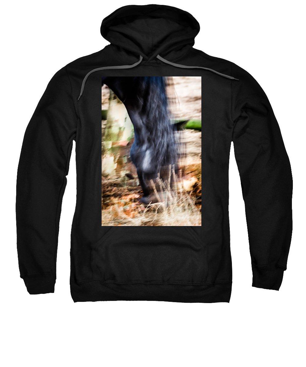 Horse Sweatshirt featuring the photograph Xengo by Edgar Laureano