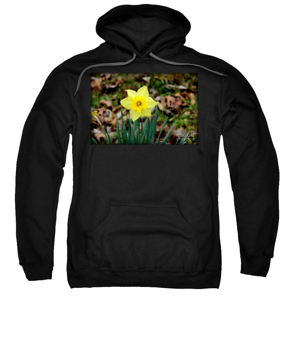 Yellow Daffodil Sweatshirt featuring the photograph Yellow Daffodil by Kathy White