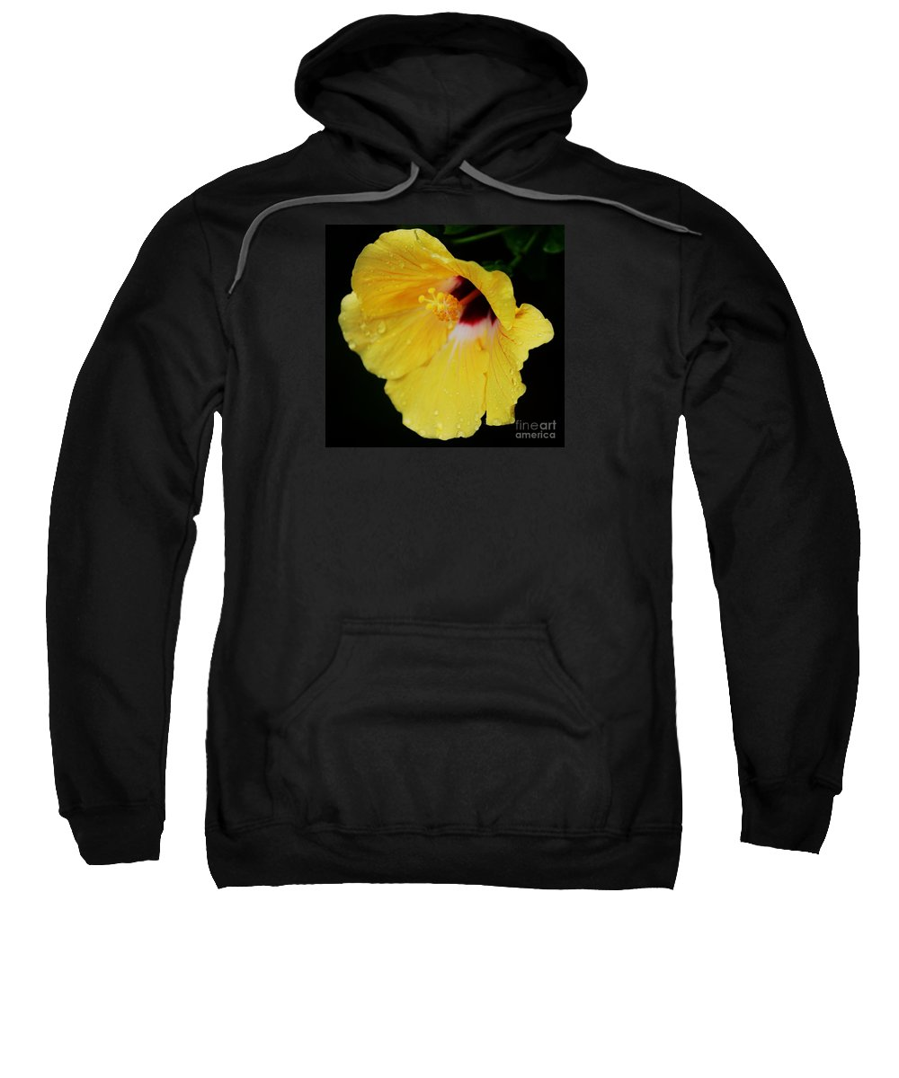 Hibiscus Photography Floral Photography Tropical Flowers Photography Bermuda Photography Nature Photography Macro Photography Stock Shot Photography  Greeting Card Wedding Card Birthday Card Canvas Frame Metal Frame Throw Pillow Art Duvet Cover Art Tote Bag Art T Shirt Art Shower Curtain Art Sweatshirt featuring the photograph Yellow Hibiscus In The Rain by Marcus Dagan