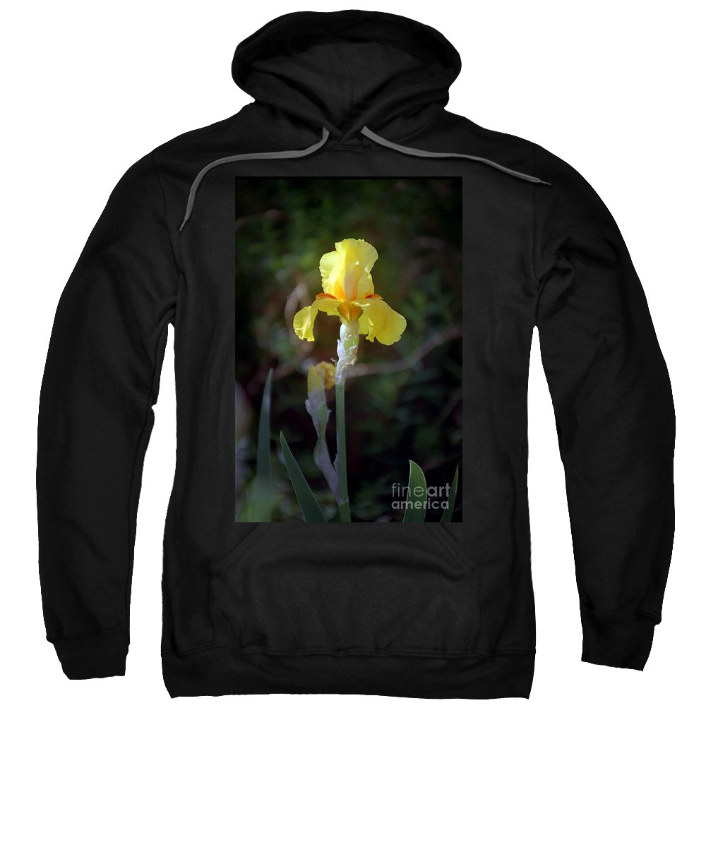 Iris Sweatshirt featuring the photograph Yellow Iris by Kathy McClure