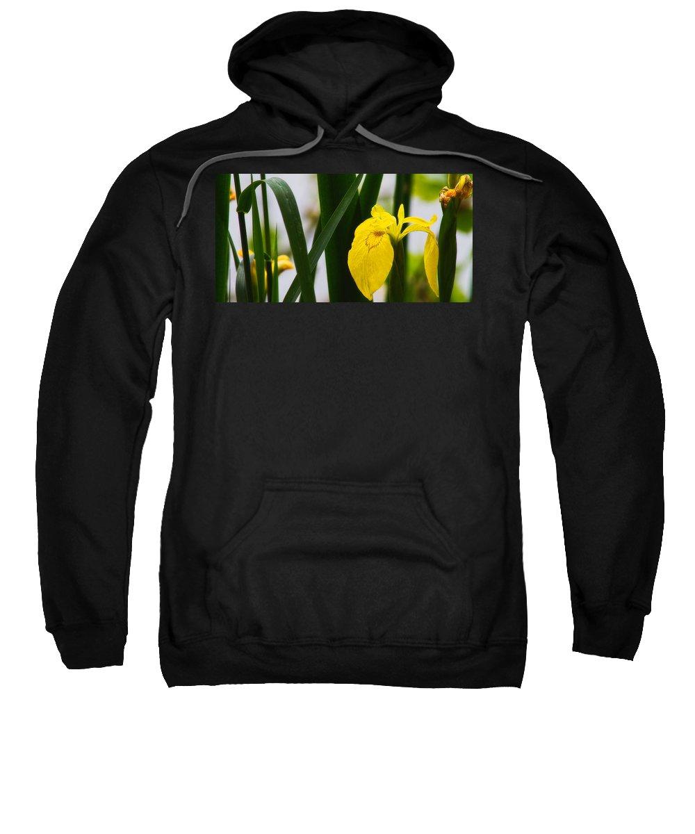 Europe Sweatshirt featuring the photograph Yellow Iris by Roberto Pagani