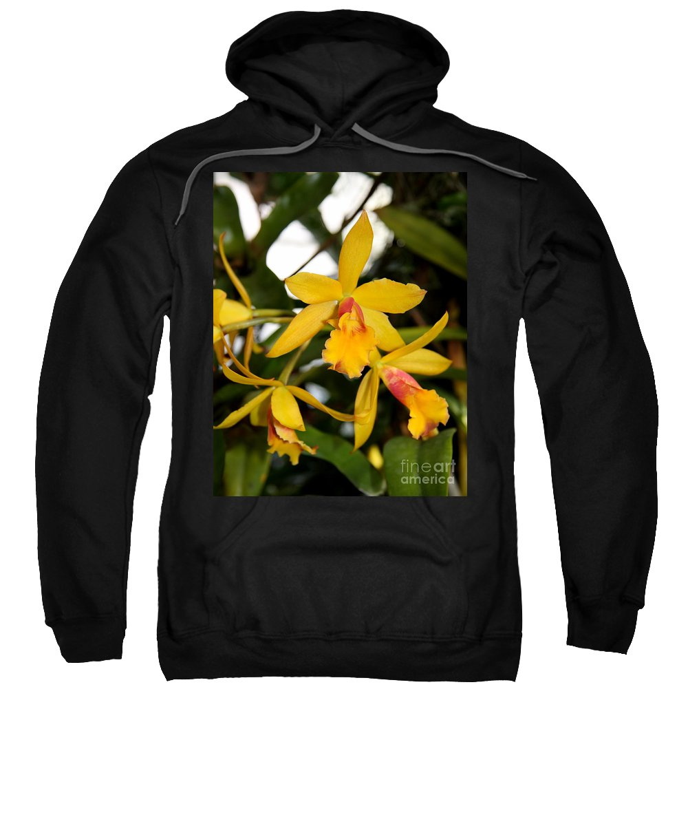 Yellow Orchid Sweatshirt featuring the photograph Yellow Orchid by Christiane Schulze Art And Photography