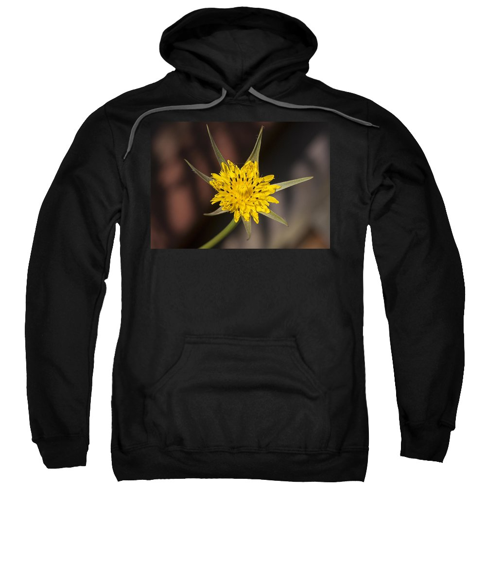 Yellow Sweatshirt featuring the photograph Yellow Star Flower by Richard Thomas