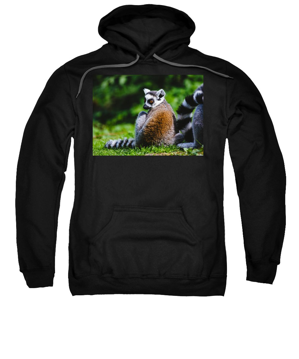 Wildlife Sweatshirt featuring the photograph Young Lemur by Pati Photography