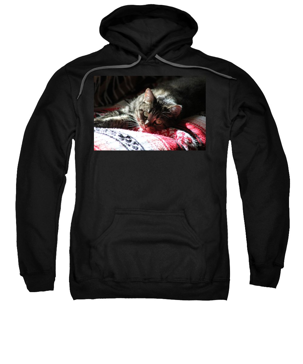 Cat Sweatshirt featuring the photograph Angel Cat by Michelle Powell