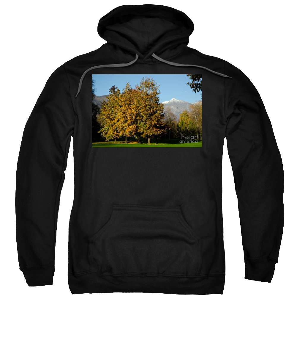 Autumn Sweatshirt featuring the photograph Autumn Trees by Mats Silvan