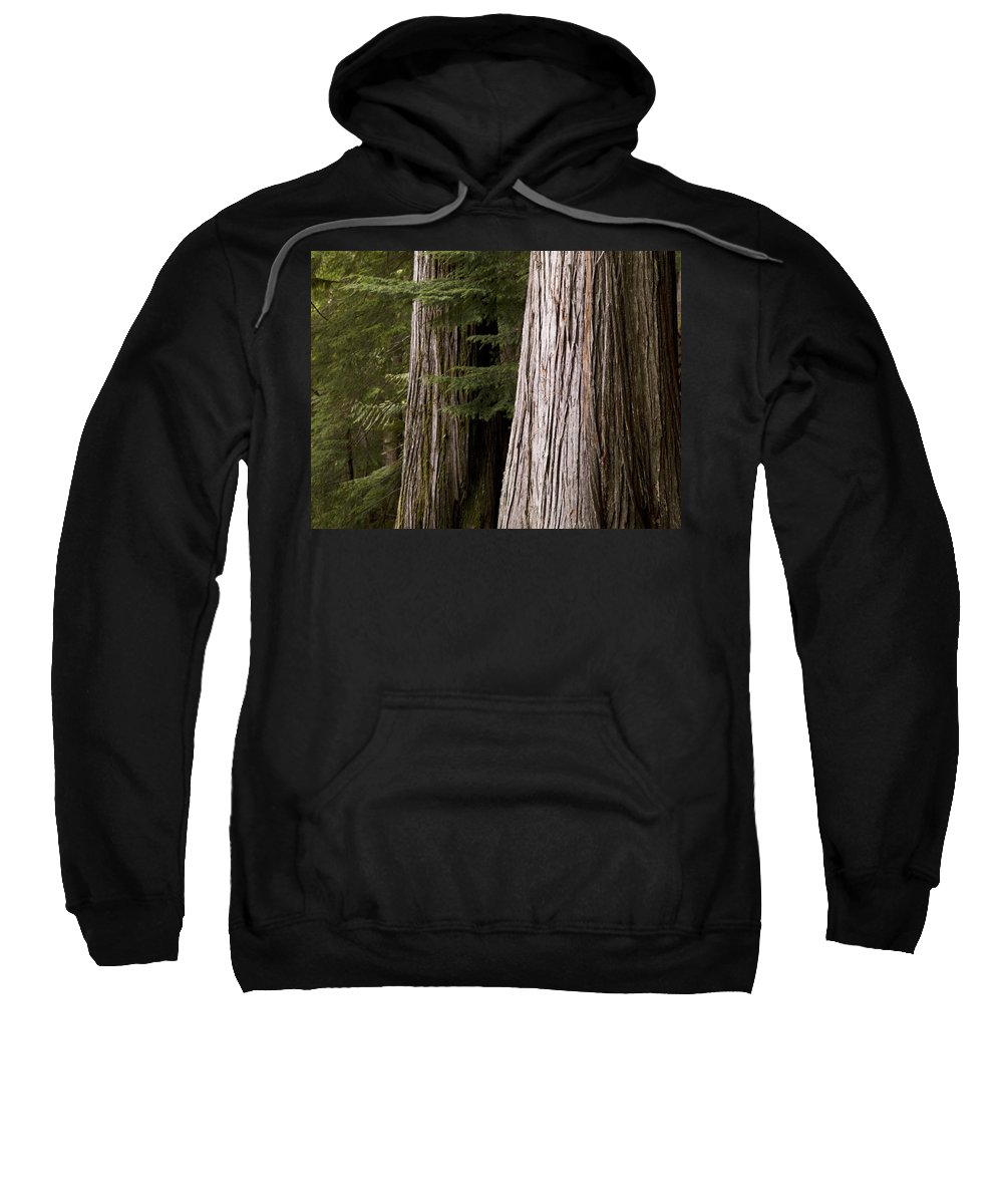 Canada Sweatshirt featuring the photograph Cedar Trees, Whistler, British Columbia by Keith Levit