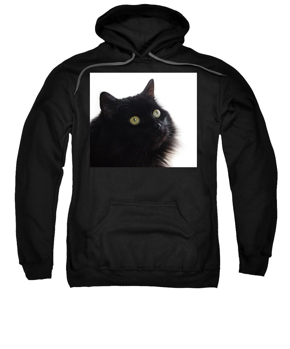 Cat Sweatshirt featuring the photograph Coco by Jeff Galbraith