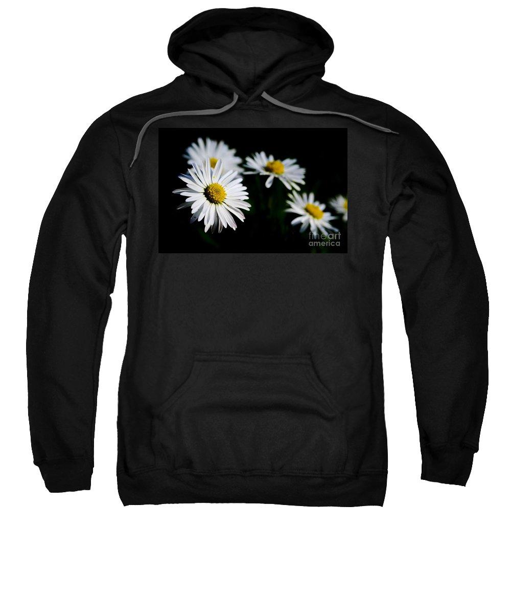 Flower Sweatshirt featuring the photograph Daisy Flowers by Mats Silvan