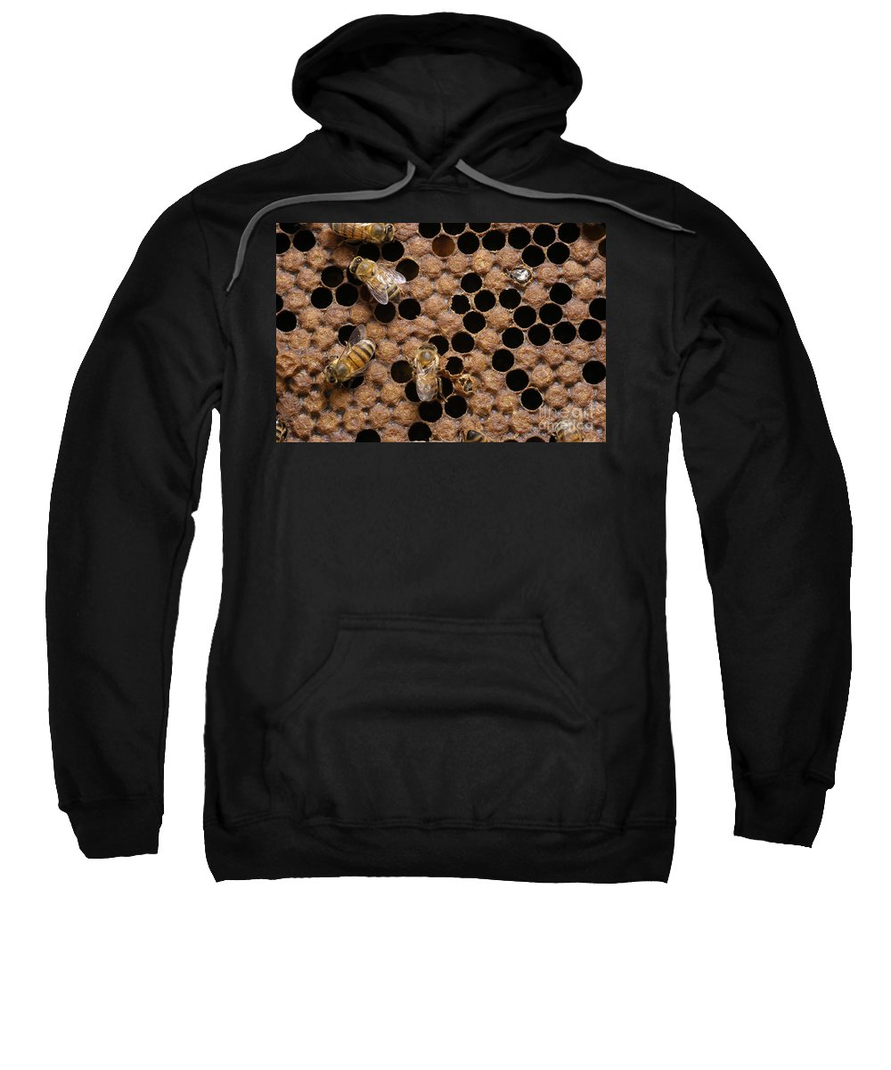 Bee Sweatshirt featuring the photograph Honey Bees by Raul Gonzalez Perez