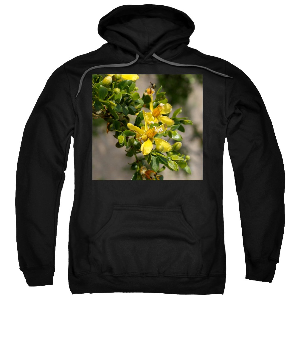 Ocotillo Wild Flower Sweatshirt featuring the photograph Ocotillo Wild Flower by Chris Brannen