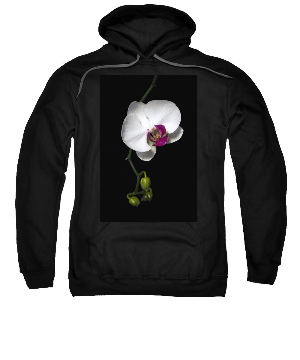 Cutout Sweatshirt featuring the photograph Orchid by David Chapman