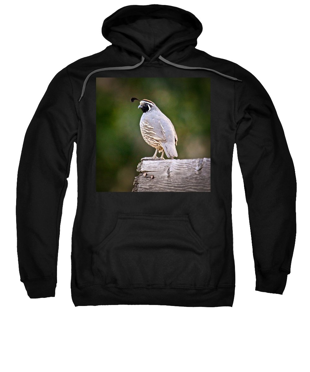 Quail Sweatshirt featuring the photograph Quail by Steve McKinzie