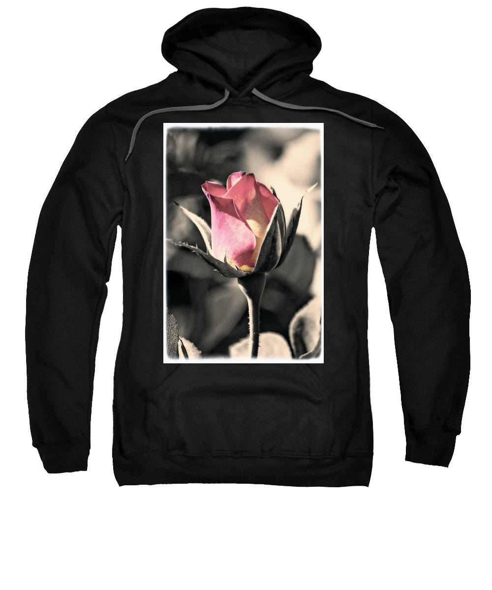 Digitally Hand Colored Sweatshirt featuring the photograph Rita Rosebud Pink by Linda Dunn