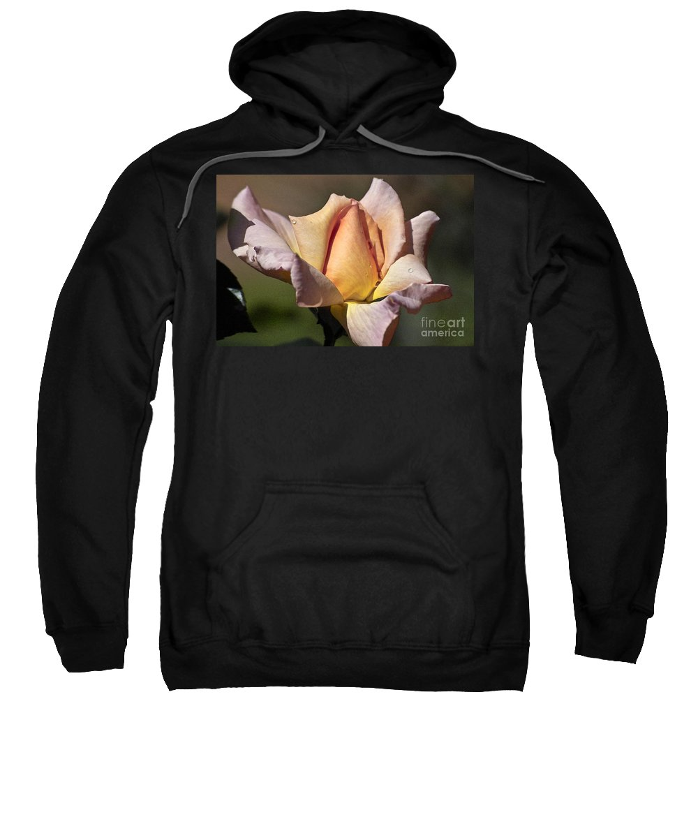 Rose Sweatshirt featuring the photograph Rose Flower by Heiko Koehrer-Wagner