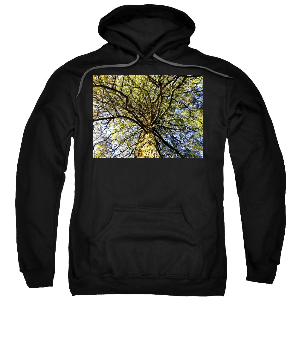 Pine Tree Sweatshirt featuring the photograph Stalwart Pine Tree by Will Borden