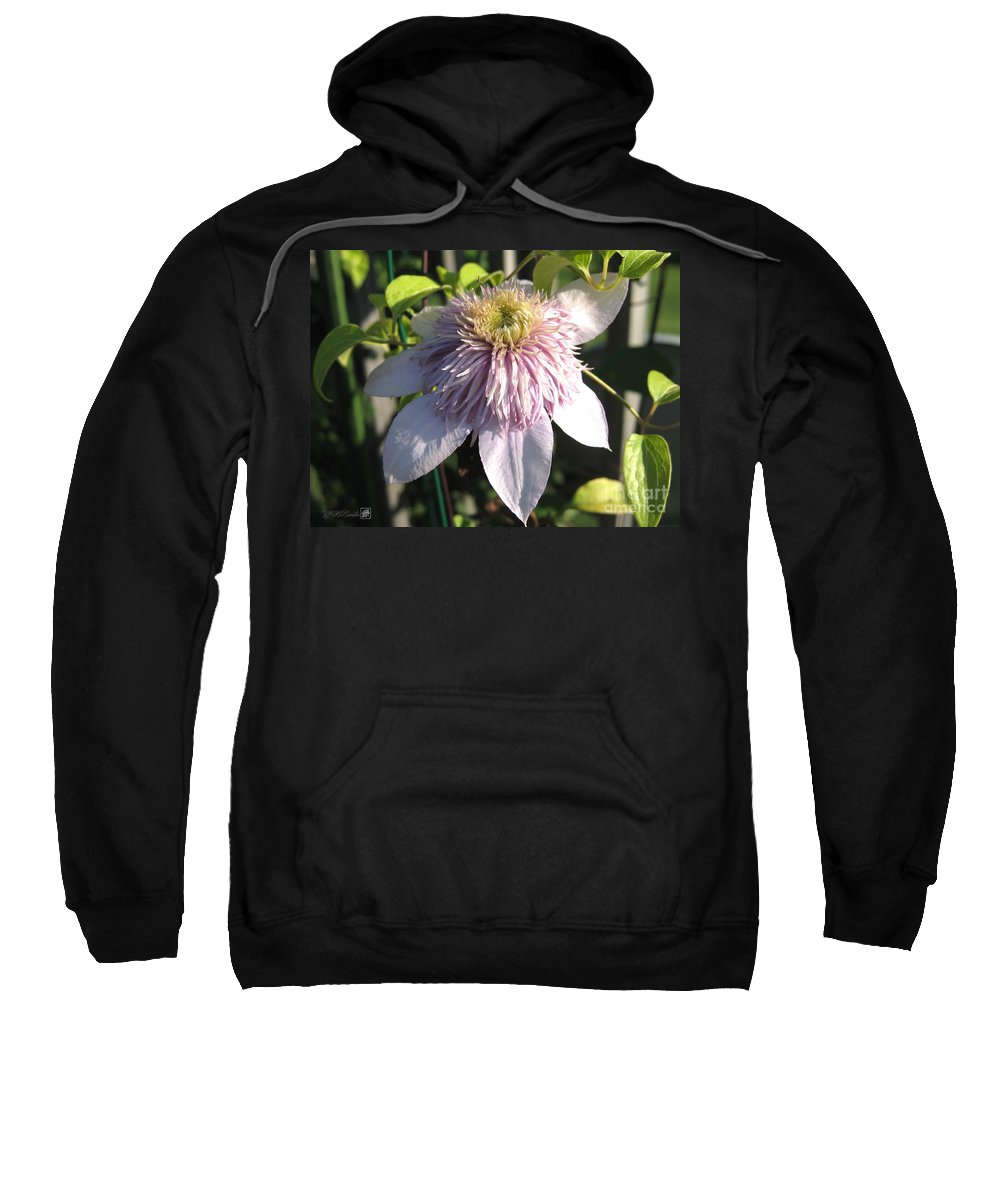 Double Clematis Sweatshirt featuring the photograph Double Clematis Named Empress by J McCombie