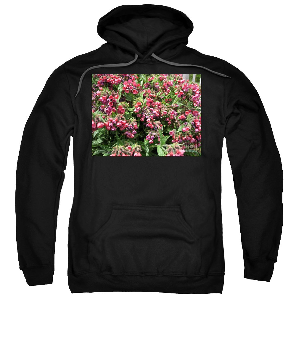 Pulmonaria Sweatshirt featuring the photograph Pulmonaria Named Raspberry Splash by J McCombie