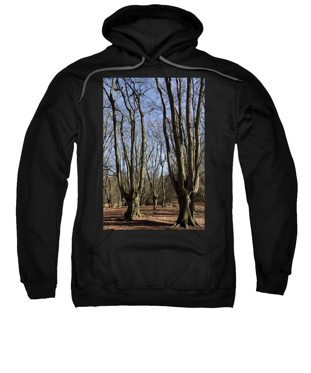 Epping Sweatshirt featuring the photograph Epping Forest by David Pyatt