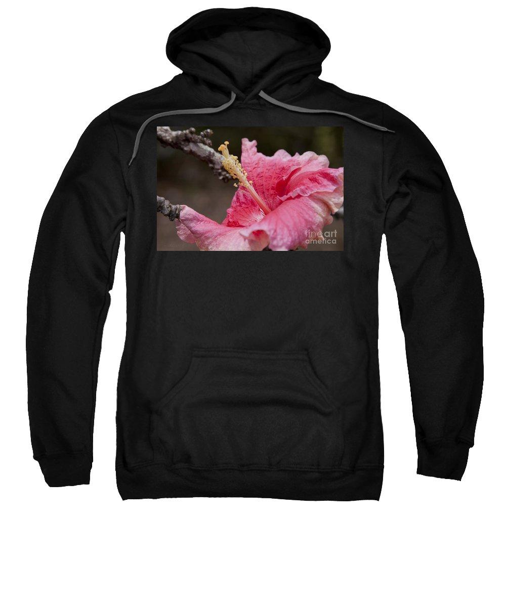 Aloha Sweatshirt featuring the photograph Art By Nature by Sharon Mau