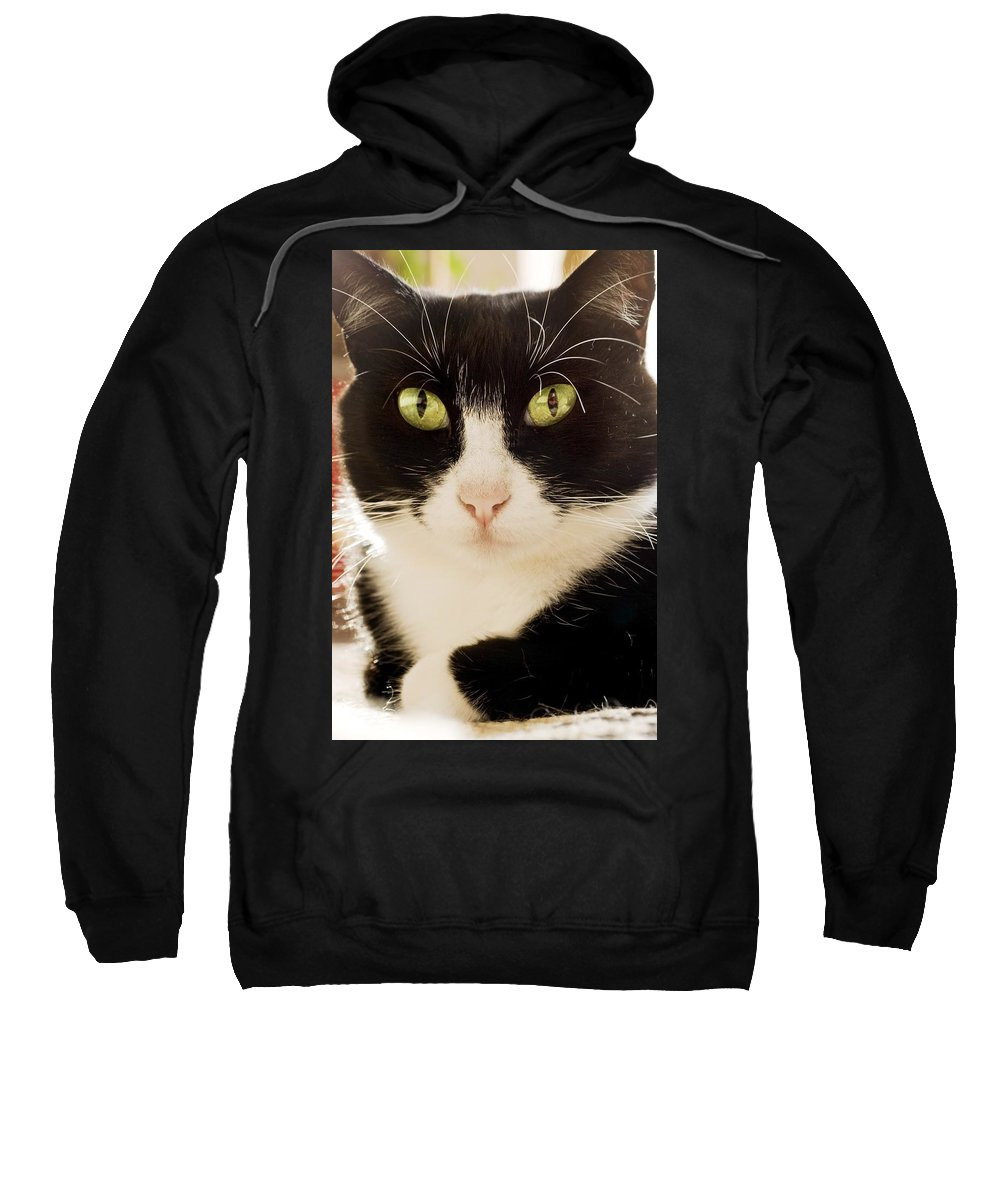 Animals Sweatshirt featuring the photograph A Cat by Ben Welsh