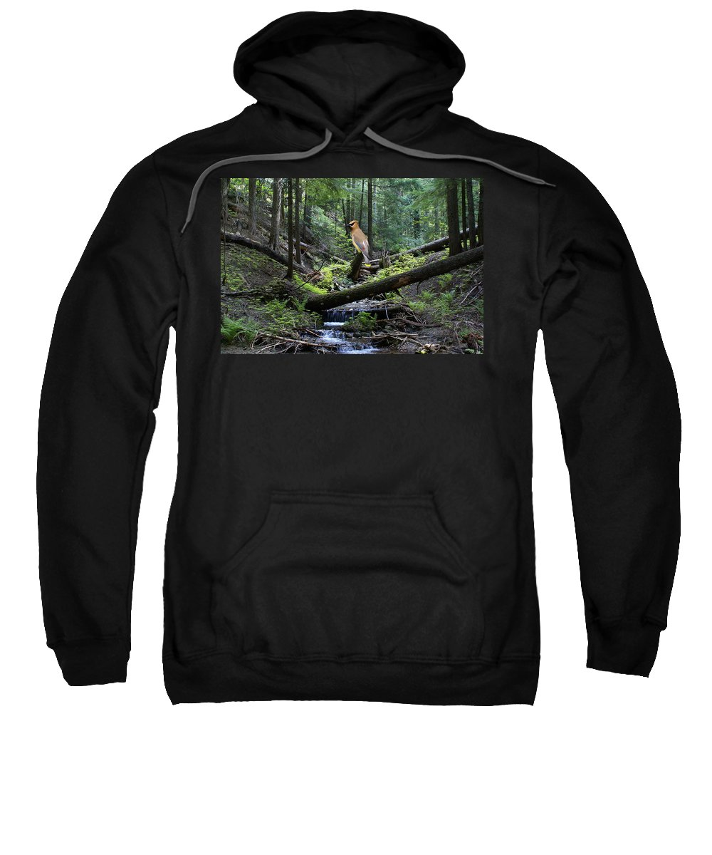 Cedar Waxwing Sweatshirt featuring the photograph A Giant Cedar Waxwing On Mt Spokane by Ben Upham III