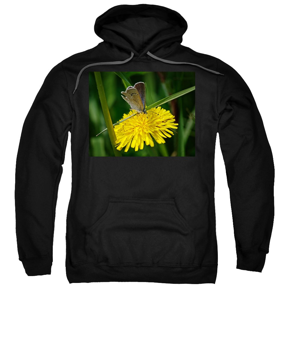 Butterfly Sweatshirt featuring the photograph A Little Blue by Susan Capuano