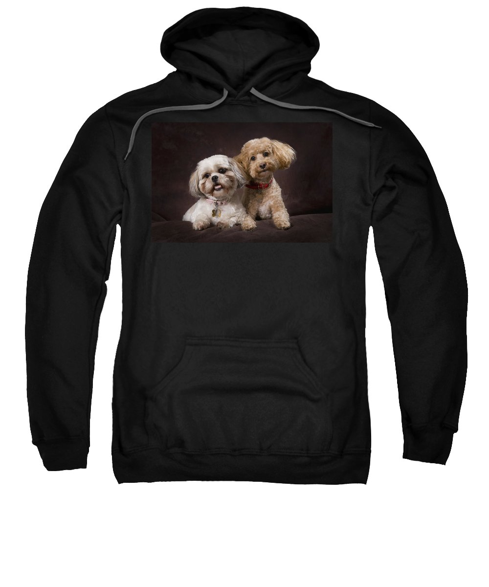 Black Background Sweatshirt featuring the photograph A Shihtzu And A Poodle On A Brown by Corey Hochachka