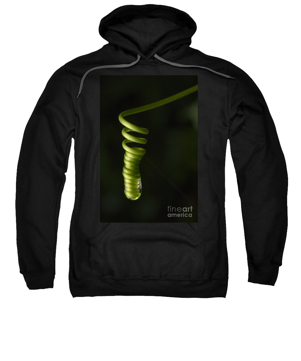 Plant Sweatshirt featuring the photograph A Weed Unfolding Its Tendril by Raul Gonzalez Perez