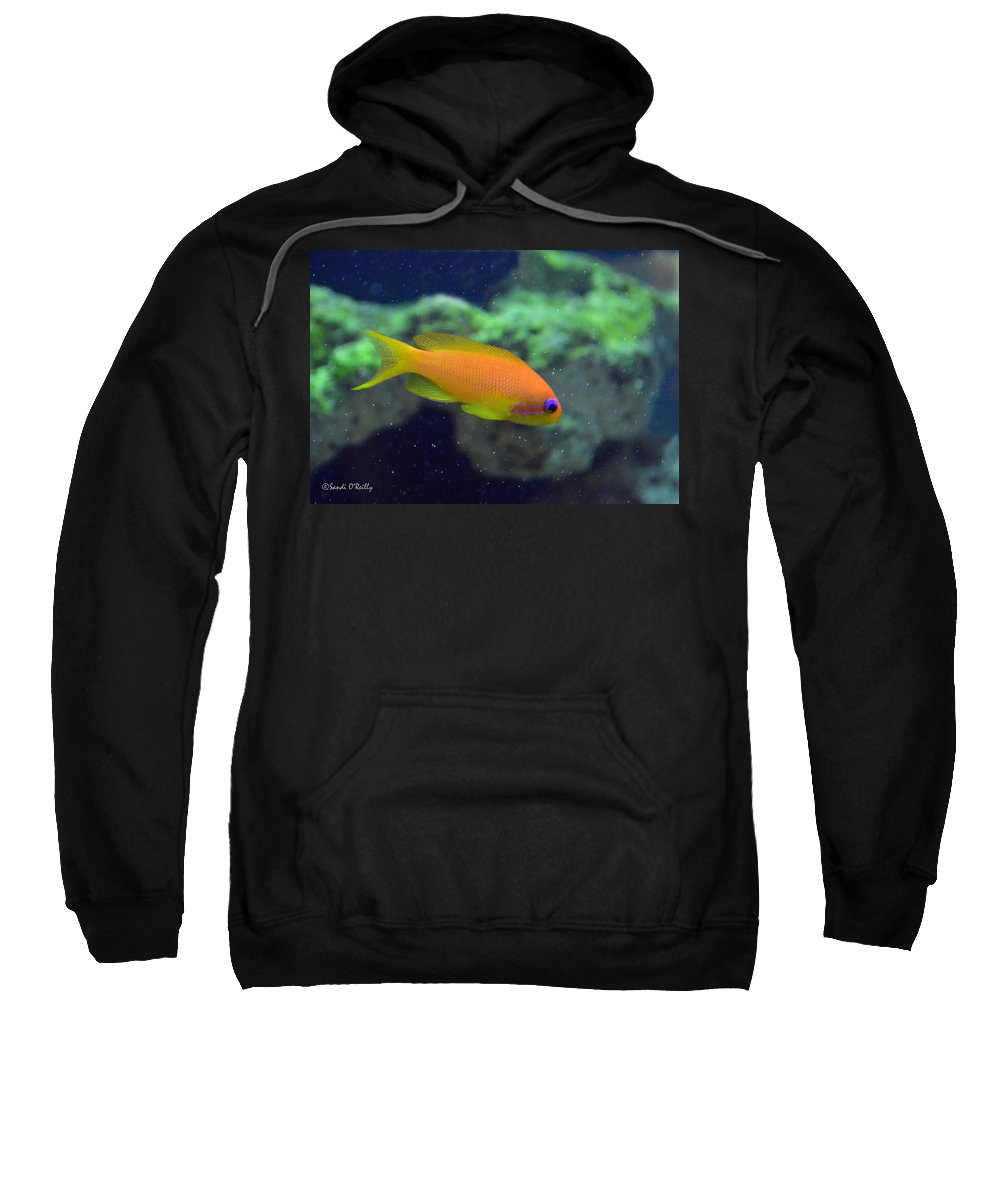 African Anthias Sweatshirt featuring the photograph African Anthias by Sandi OReilly
