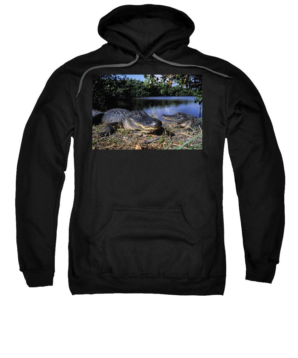 Outdoors Sweatshirt featuring the photograph American Alligators by Natural Selection David Ponton