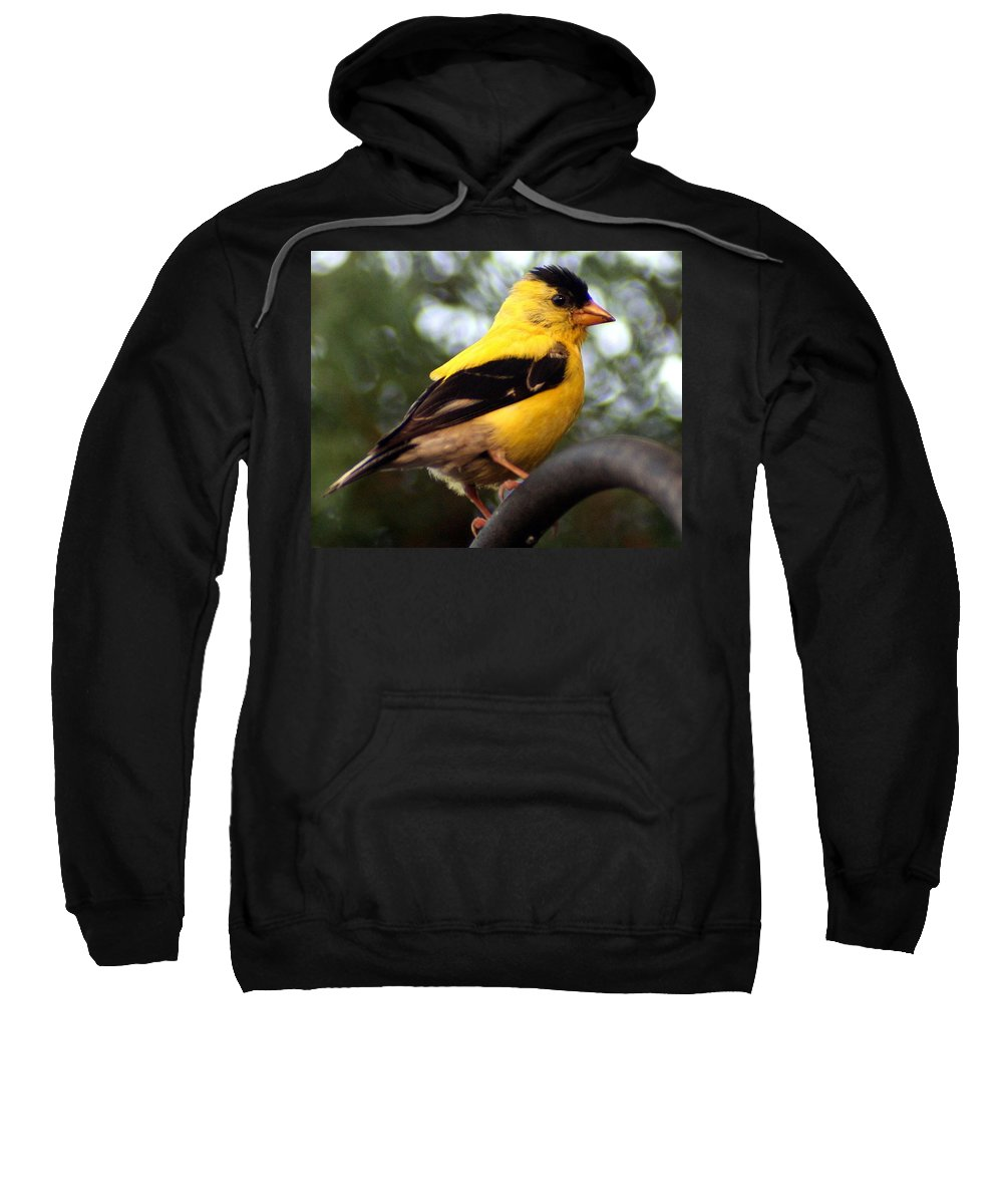 American Goldfinch Sweatshirt featuring the photograph American Goldfinch by Laurel Talabere