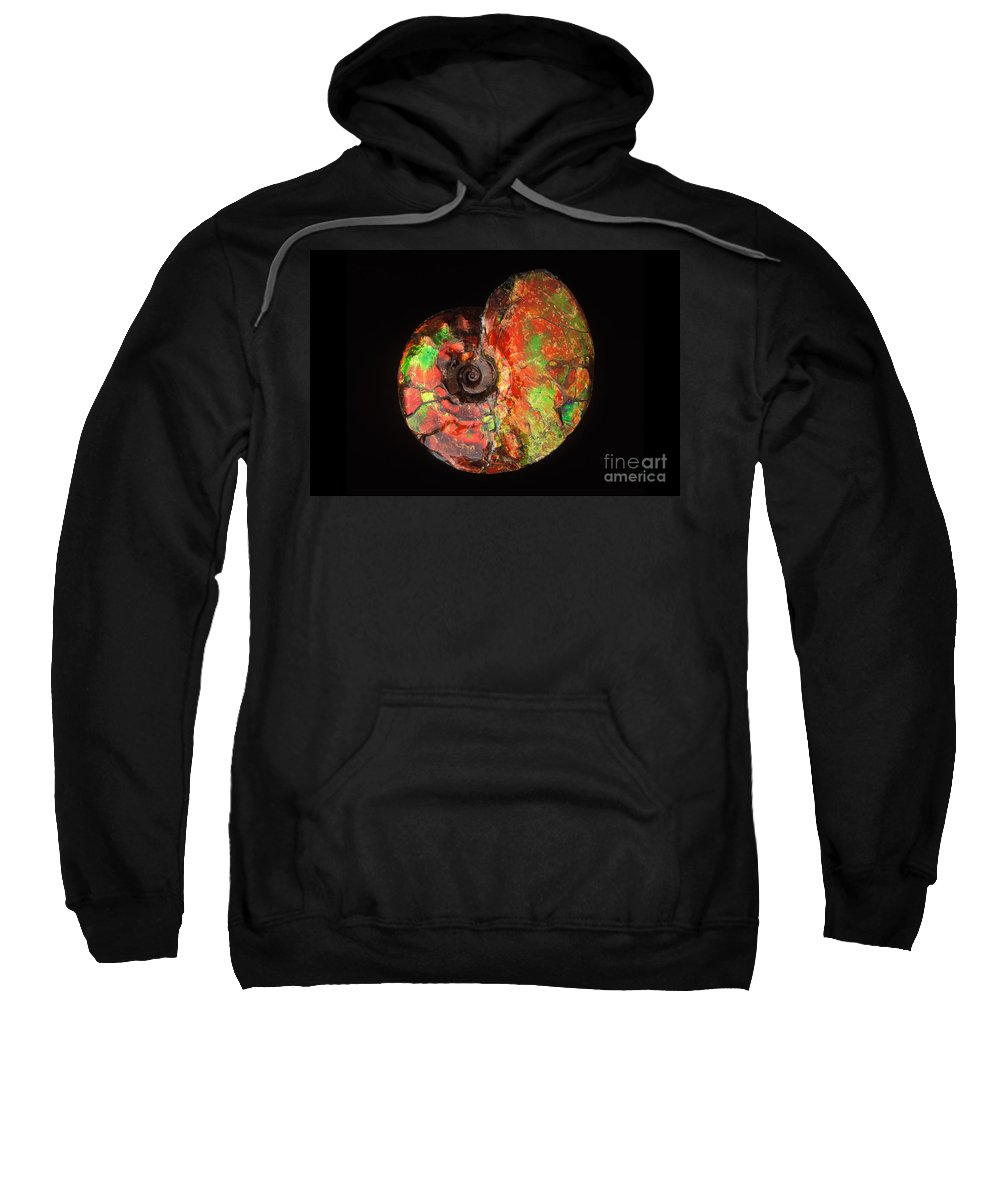 Ammonite Sweatshirt featuring the photograph Ammonite Fossil by Francois Gohier and Photo Researchers