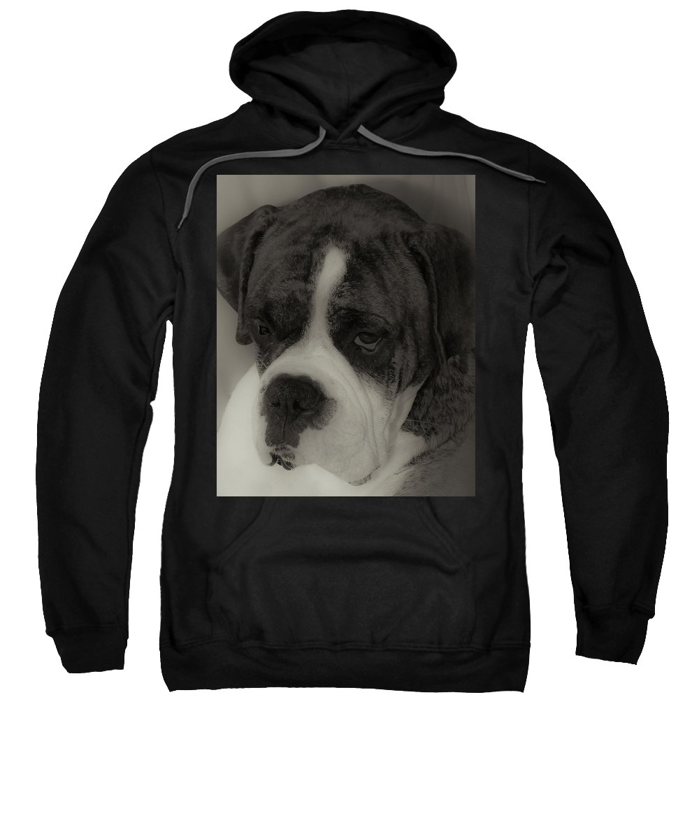 Boxer Sweatshirt featuring the photograph Angelic Boxer by DigiArt Diaries by Vicky B Fuller