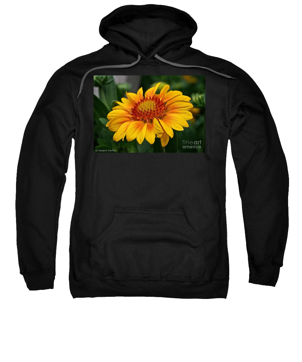 Plant Sweatshirt featuring the photograph Arizona Apricot by Susan Herber