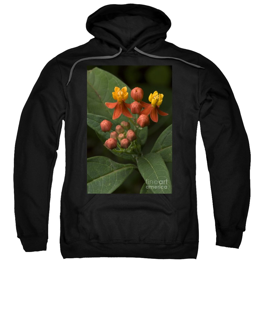 Plant Sweatshirt featuring the photograph Asclepias Curassavica by Raul Gonzalez Perez