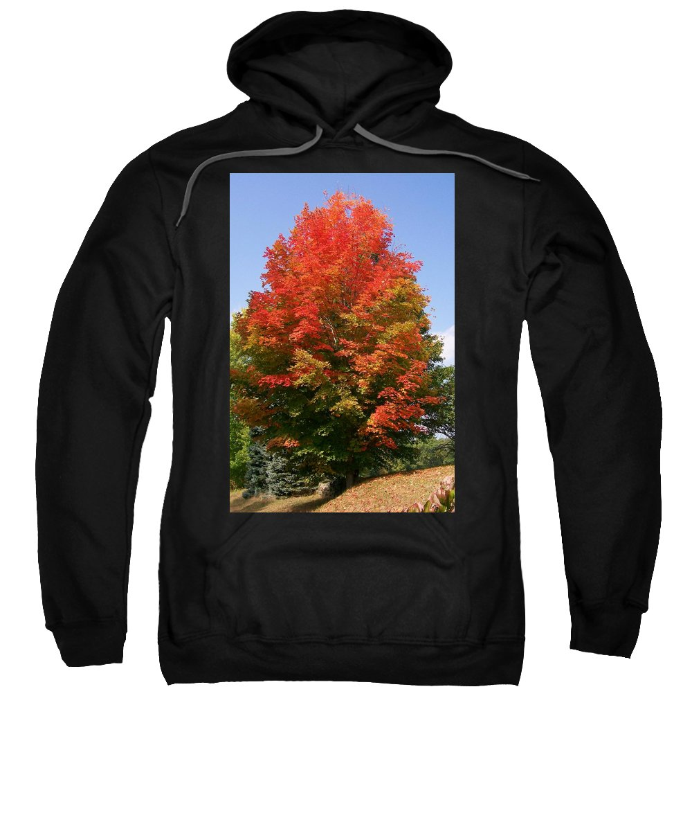 Photo Sweatshirt featuring the photograph Autumn Leaves by Barbara S Nickerson