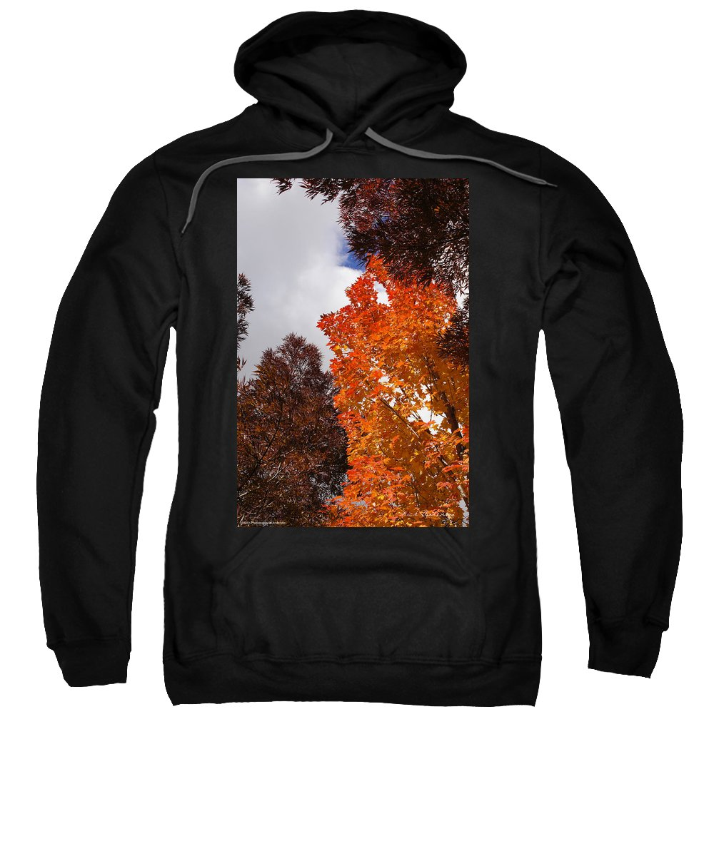 Autumn Sweatshirt featuring the photograph Autumn Looking Up by Mick Anderson