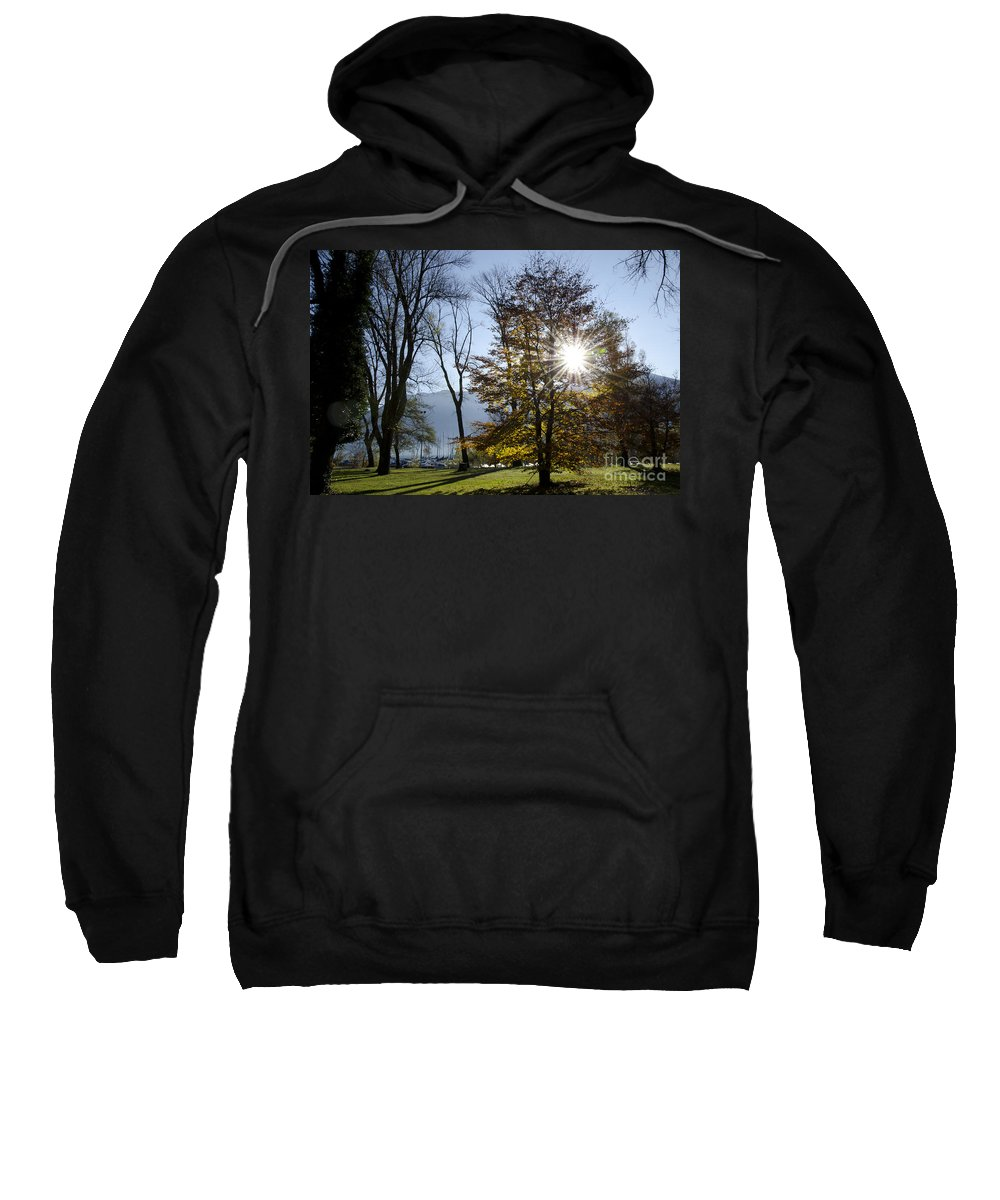 Trees Sweatshirt featuring the photograph Autumn Tree In Backlight by Mats Silvan