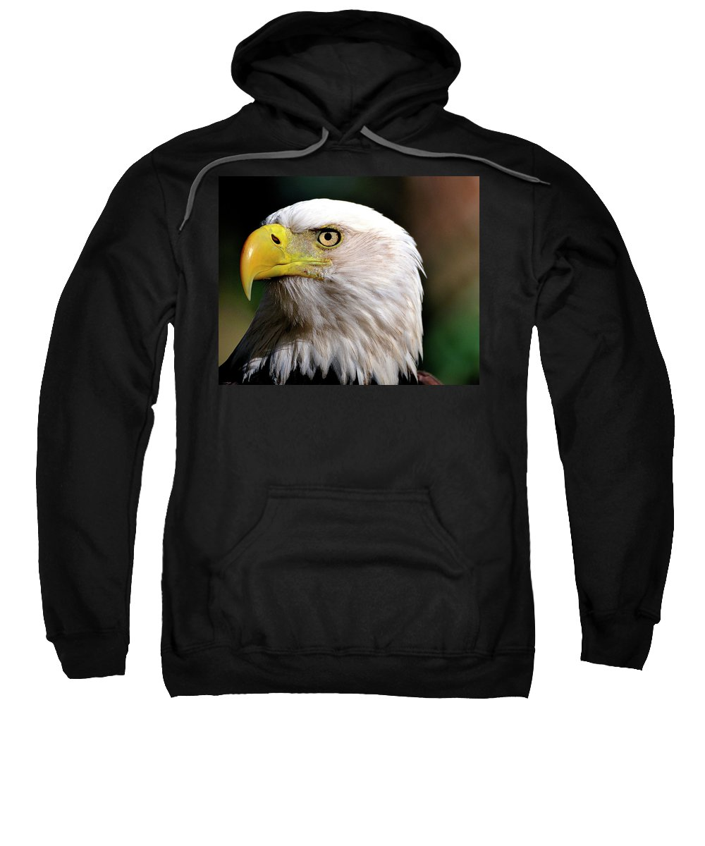 Bald Sweatshirt featuring the photograph Bald Eagle Close Up by Bill Dodsworth