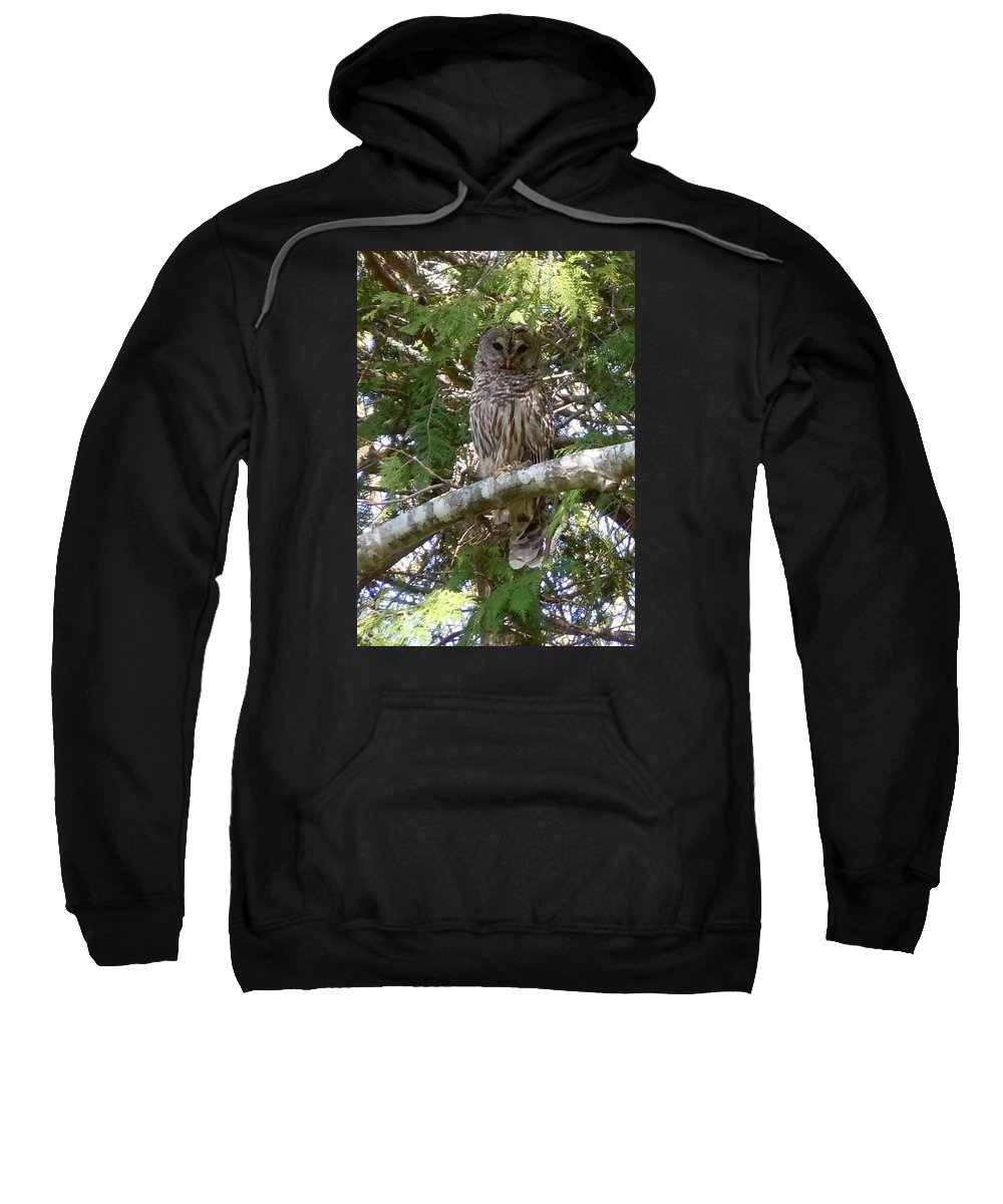 Birds Sweatshirt featuring the photograph Barred Owl by Francine Frank