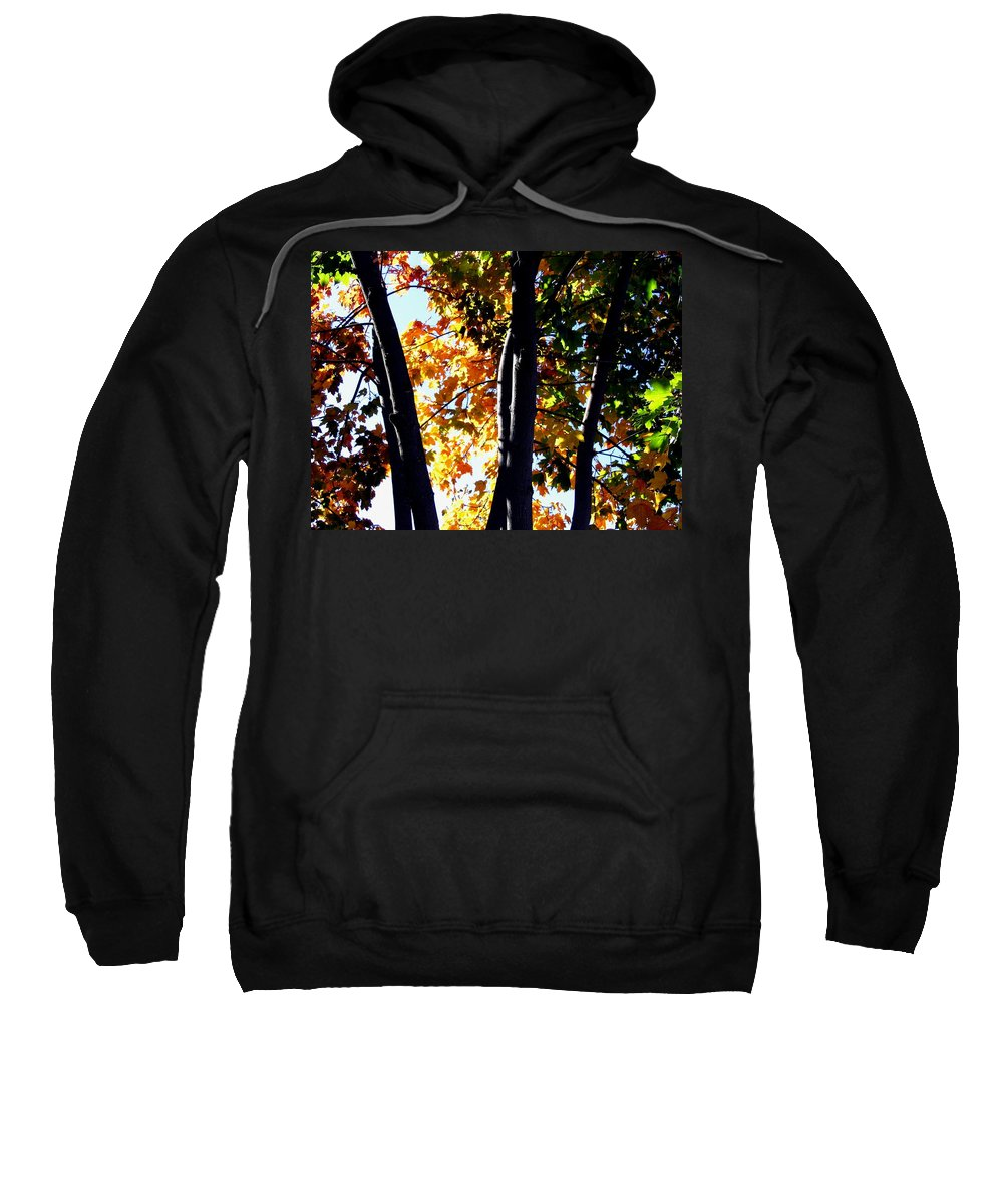 Bathed In Sunlight Sweatshirt featuring the photograph Bathed In Sunlight by Will Borden