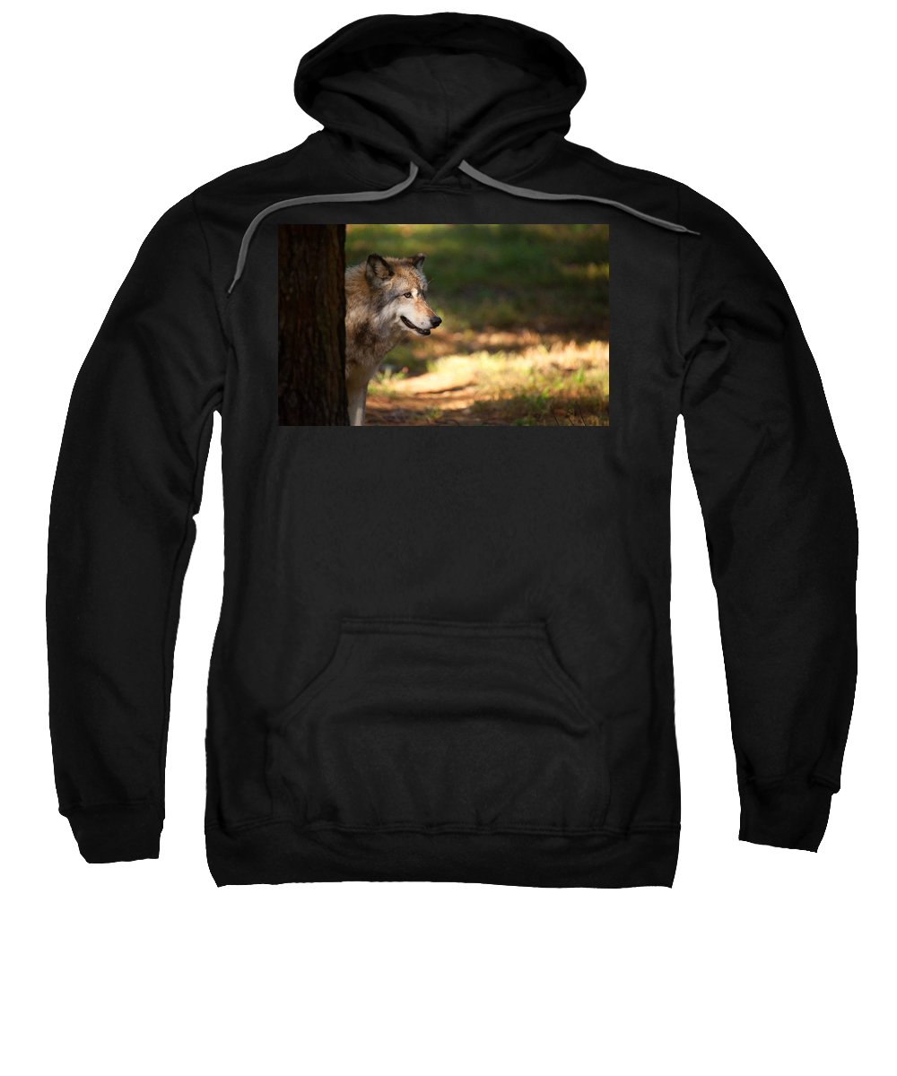Wolf Sweatshirt featuring the photograph Behind The Tree by Karol Livote