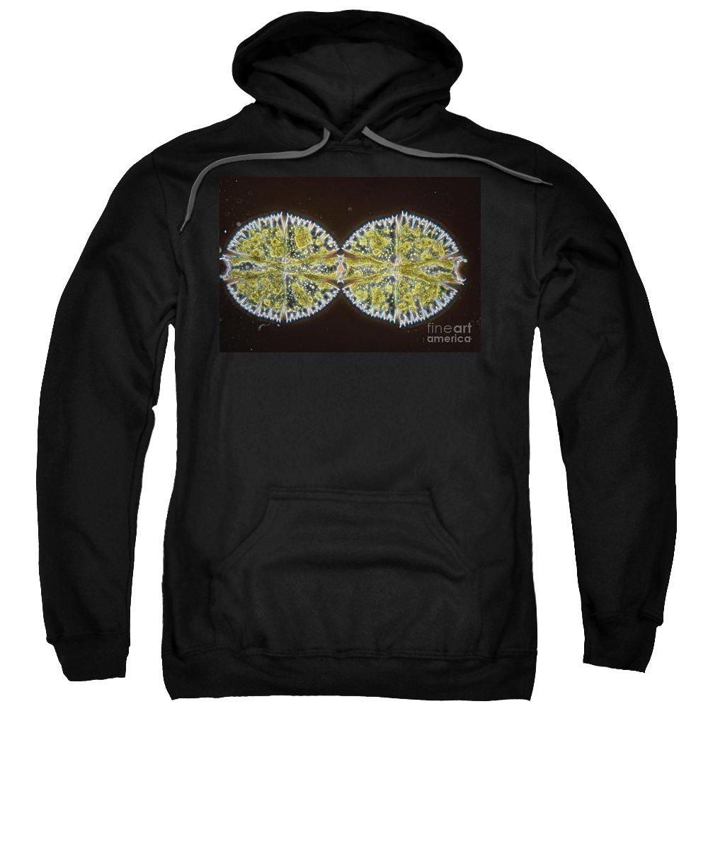 Science Sweatshirt featuring the photograph Binary Fission In Micrasterias Sp by M. I. Walker