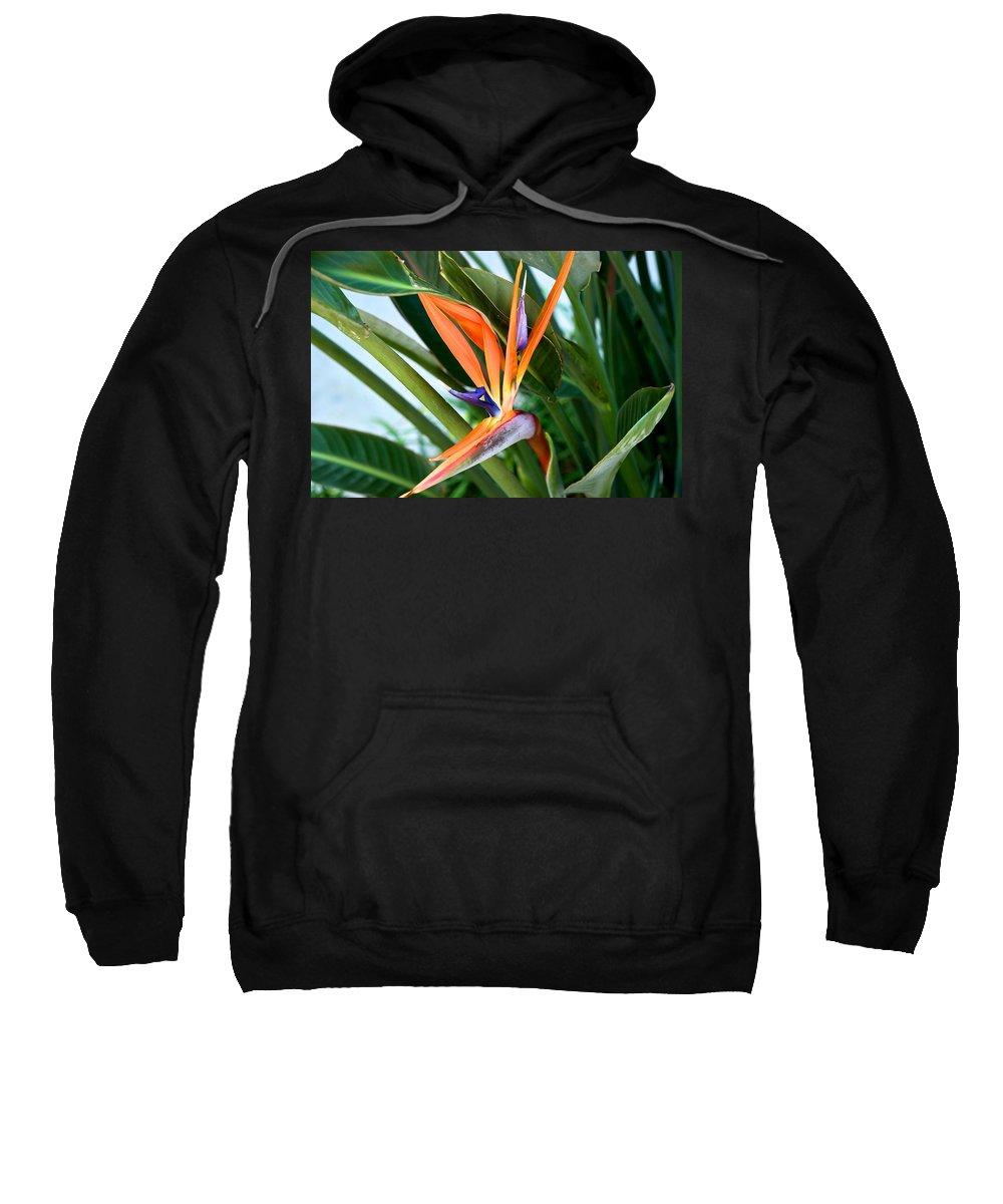 Bird Of Paradise Sweatshirt featuring the photograph Bird by Joseph Yarbrough