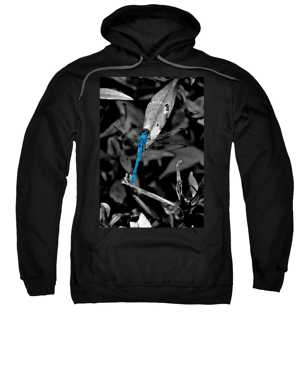 Dragonfly Sweatshirt featuring the photograph Black And Blue by DigiArt Diaries by Vicky B Fuller