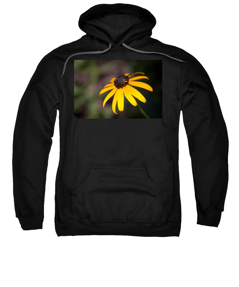Flora Sweatshirt featuring the photograph Black Eyed Susan With Young Bee by Lynne Jenkins