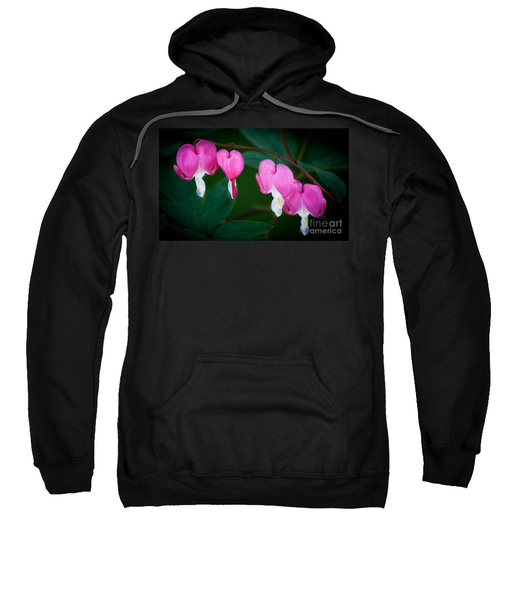 Flower Sweatshirt featuring the photograph Bleeding Hearts 002 by Larry Carr