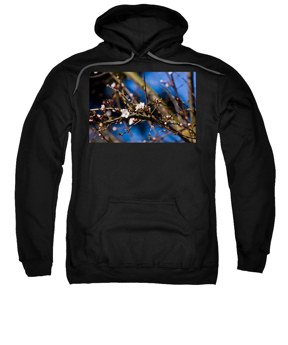 Tree Sweatshirt featuring the photograph Blooming Tree With White Flowers by Pati Photography