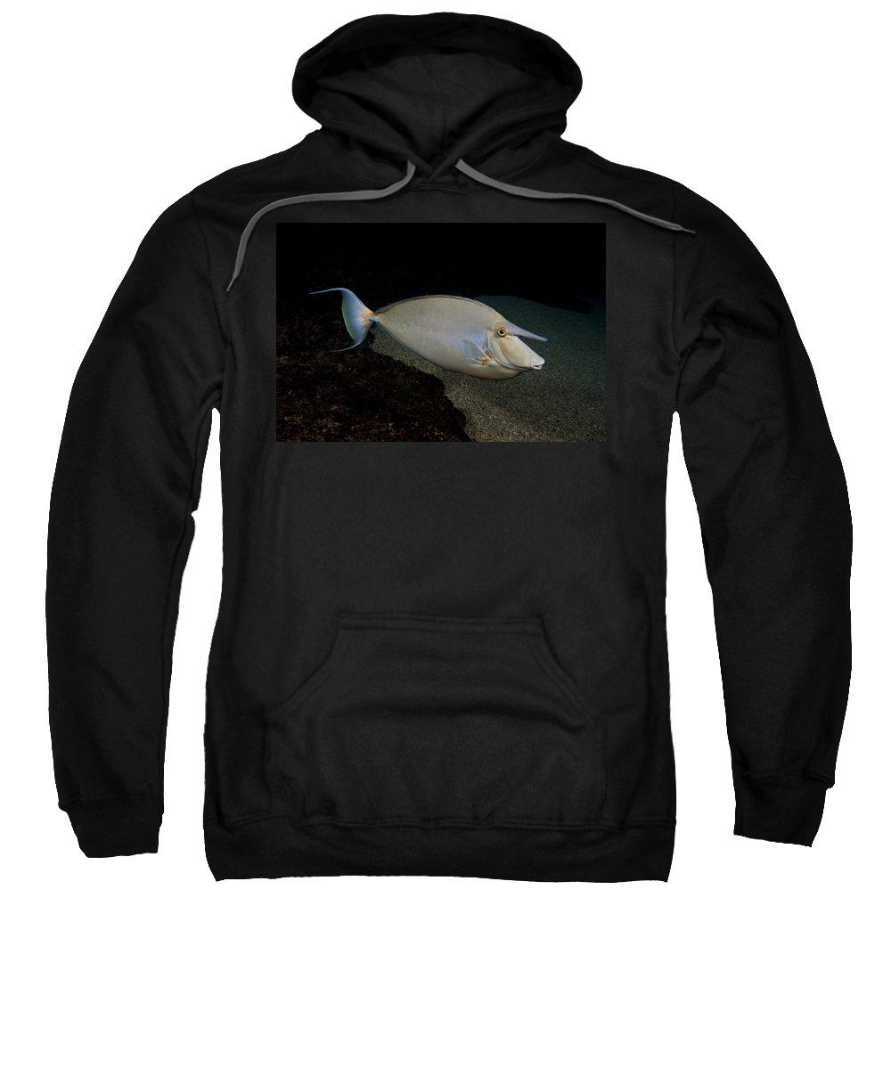 Background Sweatshirt featuring the photograph Bluespine Unicornfish by Dave Fleetham